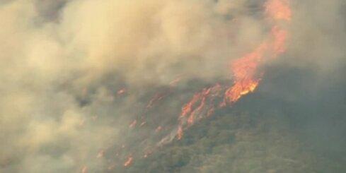 Ugunsgrēks iznīcinājis vairāk nekā 100 hektārus meža Kalifornijas dienvidos