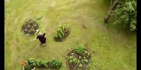 Aculiecinieka video: Dusmīga sieviņa dzenā kaķus