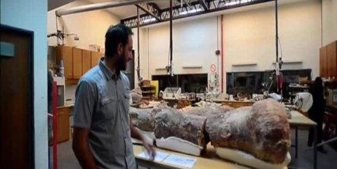 Atrasti planētas vēsturē lielākā dzīvnieka kauli