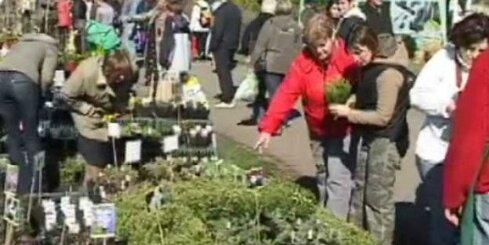'Mans zaļais dārzs': Topā stādu gadatirgi
