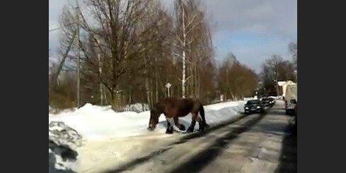 Zirgs Rīgas ielās