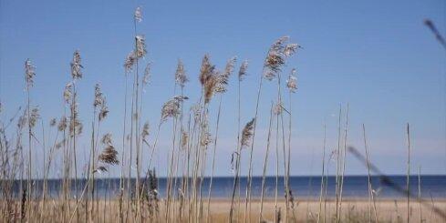 Синоптики: в ряде районов Латвии утром похолодало до +5 градусов