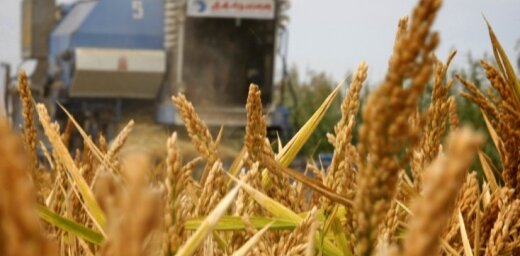 ZM no Latvijas lauksaimniekiem nav saņēmusi rosinājumus izsludināt ārkārtējo situāciju sausuma ietekmes dēļ
