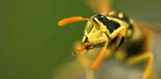 Nejauši iedzerot šķidrumus ar kukaiņiem iekšā, tiek sadzelti divi cilvēki