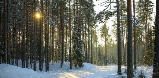 Noklausies! Strazds, Zadovska un Muktupāvels izdod divas Ziemassvētku laika dziesmas