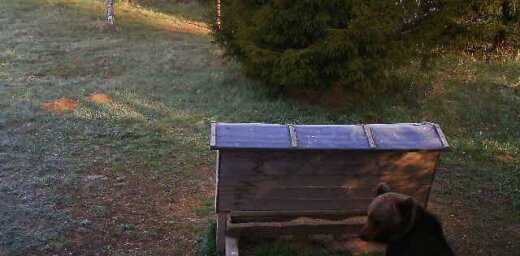 ФОТО: Недалеко от основной школы замечен медвежонок
