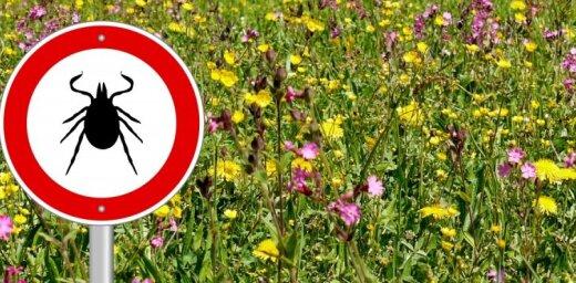 Латвийских детей бесплатно будут прививать от энцефалита