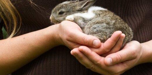 Читательница обвинила airBaltic в дискриминации карликовых кроликов