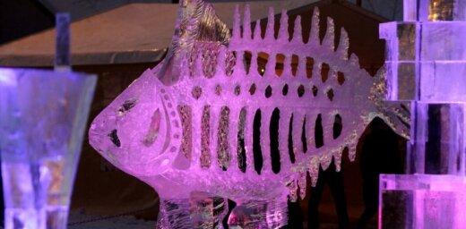Jelgavā tapušās ledus skulptūras varēs apskatīt Jēkabpilī