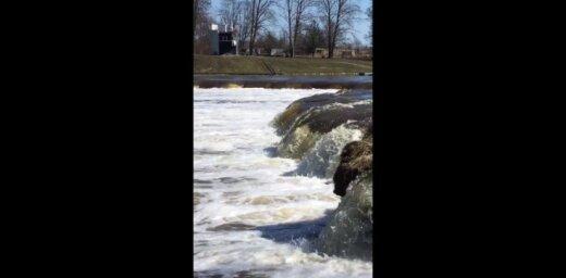 Aculiecinieka video: Kuldīgā lido zivis