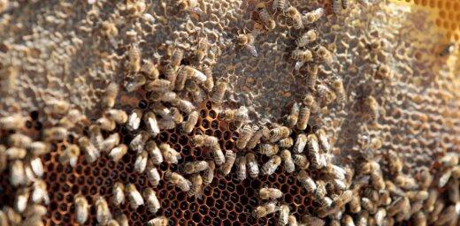 Суд ЕС подтвердил ограничения на вредные для пчел пестициды