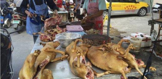 Nākamnedēļ Ķīnā sāksies pretrunīgi vērtētais suņu gaļas ēšanas festivāls
