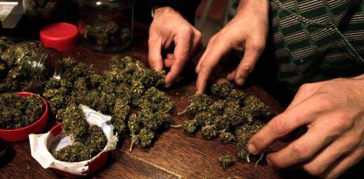 """В Латвии массово выращивают марихуану: """"травка"""" стала лидером на подпольном наркорынке"""