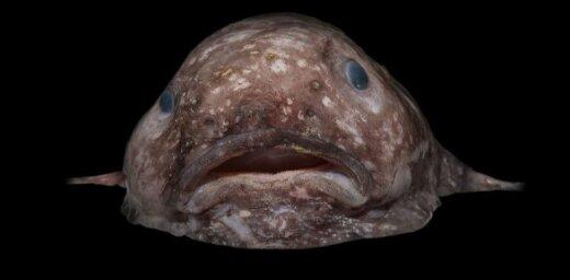 На дне океана найдены неизвестные науке необычные существа