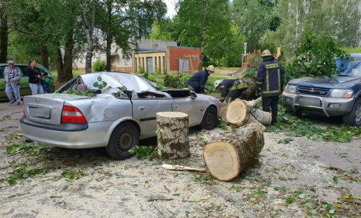 ФОТО: В Чиекуркалнсе огромный тополь раздавил четыре машины