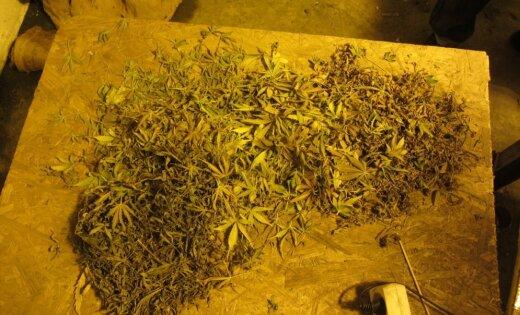 Задержана группа лиц, причастных к хранению наркотиков и психотропных веществ