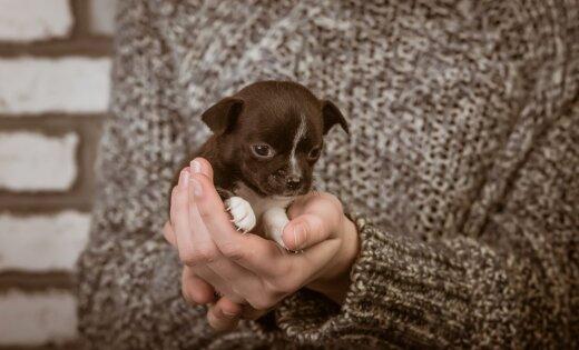 Женщина выбросила с 5-го этажа мешки со щенками: одно животное погибло