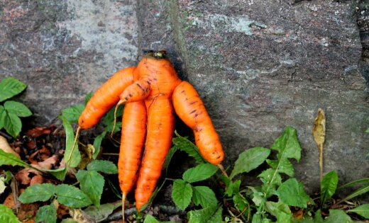 Dokumentē savus dārza brīnumus un sūti 'Delfi Aculieciniekam'