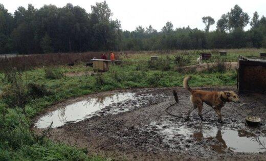 PVD saņem sūdzības par bēdīgajiem apstākļiem dzīvnieku aizstāvju biedrībā