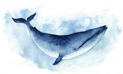 """Куда уплыл """"синий кит""""? Галина Мурсалиева в Риге рассказала о судьбе """"групп смерти"""""""