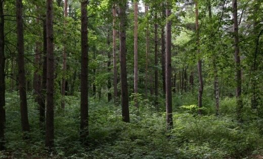 Lasītāja: uzmini nu, kas tas par mežu?