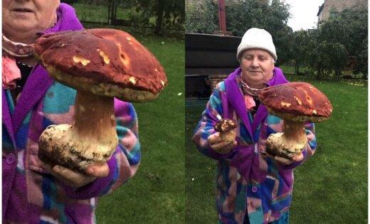 ФОТО: Под Апшуциемсом нашли гигантский боровик весом три килограмма
