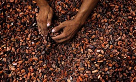Какао-бобы подешевели до минимума за 9 лет