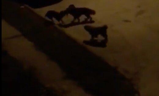 Policija Pārdaugavā meklē agresīvu suņu baru