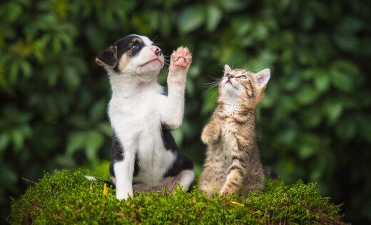 Питомцы в законе. Что нужно знать каждому, кто хочет завести кота или собаку