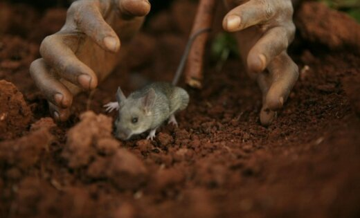 'Vampīru mednieki' Malāvijā nogalina piecus cilvēkus; ANO evakuē darbiniekus