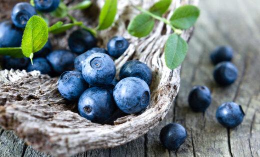 Kocēnu pagasta saimniecību 'Dižoga' titulē par 'Veselīga uztura ražotāju'