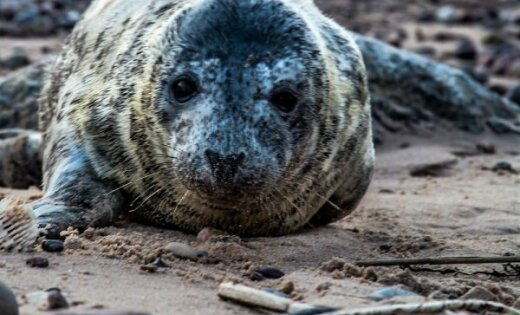 ФОТО: Тюлененок, которому нравится фотографироваться