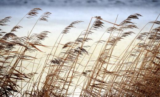 Oranžais brīdinājums: Latvijas piekrastes rajonos naktī uz ceturtdienu gaidāms stiprs vējš