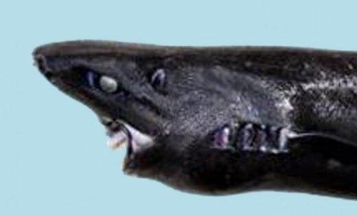 В глубинах Тихого океана открыт новый вид светящихся акул