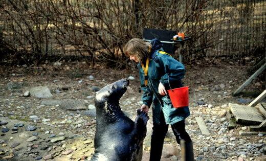 Roņu šovs un citas izklaides - pirmās 'Roņu dienas' Rīgas Zoo