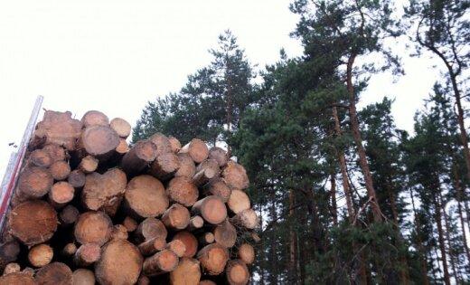 Mežu īpašnieki aicina ļaut kailcirtes sausās minerālaugsnēs augošās priežu mežaudzēs