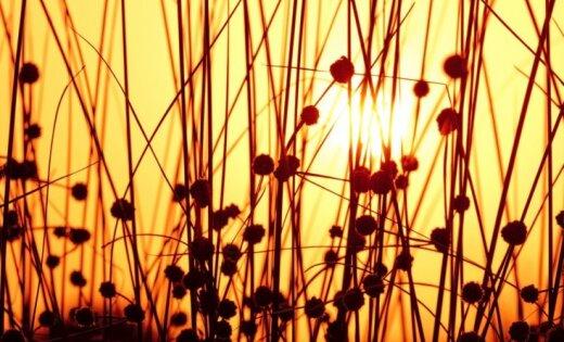 Синоптики: в воскресенье потеплеет до +24 градусов