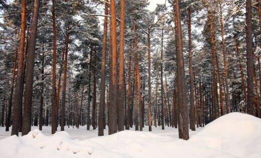 Mežu zinātnieks: neaiztiekot mežsaimniecības pamatus, mežu izciršana nedraud