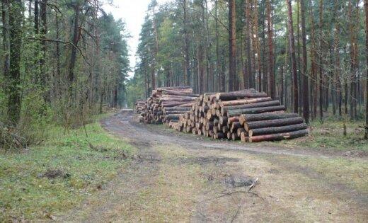 Meža dienests apšauba LVM mežu izciršanas politiku