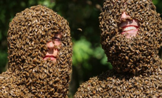 Sacensības, kurš vairāk aplips ar bitēm
