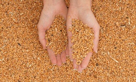Российская Федерация обогнала США поэкспорту зерна