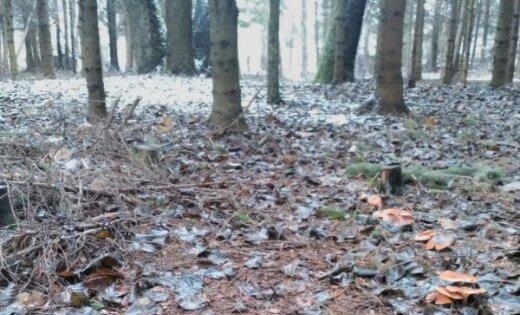Sēņošanas sezona nebeidzas – lasītājs decembrī atrod sēnes