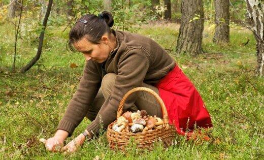 Obligātais darbiņš, pirms dodies mežā ar grozu