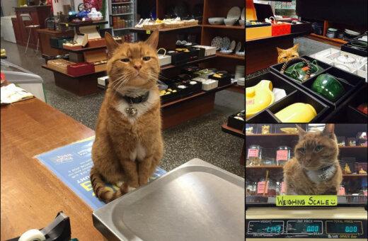 """Кузе и Мурису привет! Этот кот девять лет """"управляет"""" магазином… и без выходных!"""