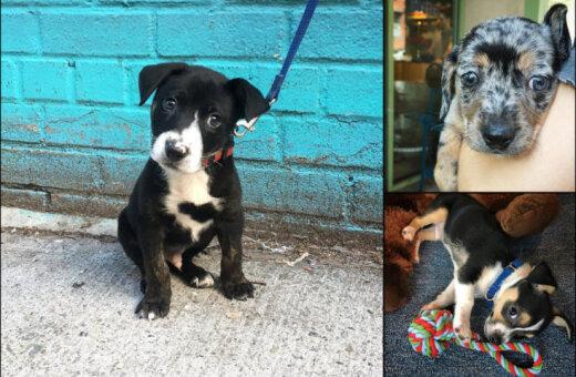 Туннельный синдром и другие беды: 22 причины никогда не брать собаку из приюта