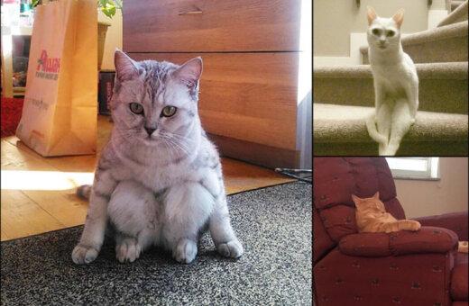 Не от мира сего: 15 фото котиков, которые ведут себя очень странно