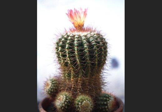 """Чем длиннее иглы кактуса, тем лучше он вбирает в себя негатив.  Плющ в народе называют  """"мужегоном """"."""