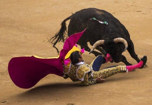 В Мадриде впервые за 35 лет отменили корриду: быки победили