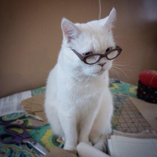 Kaķis, kurš zina visu...