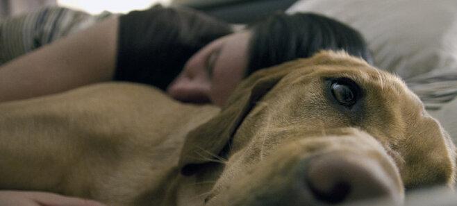 Аллергия на собачью шерсть. Есть ли у вас шанс завести питомца?